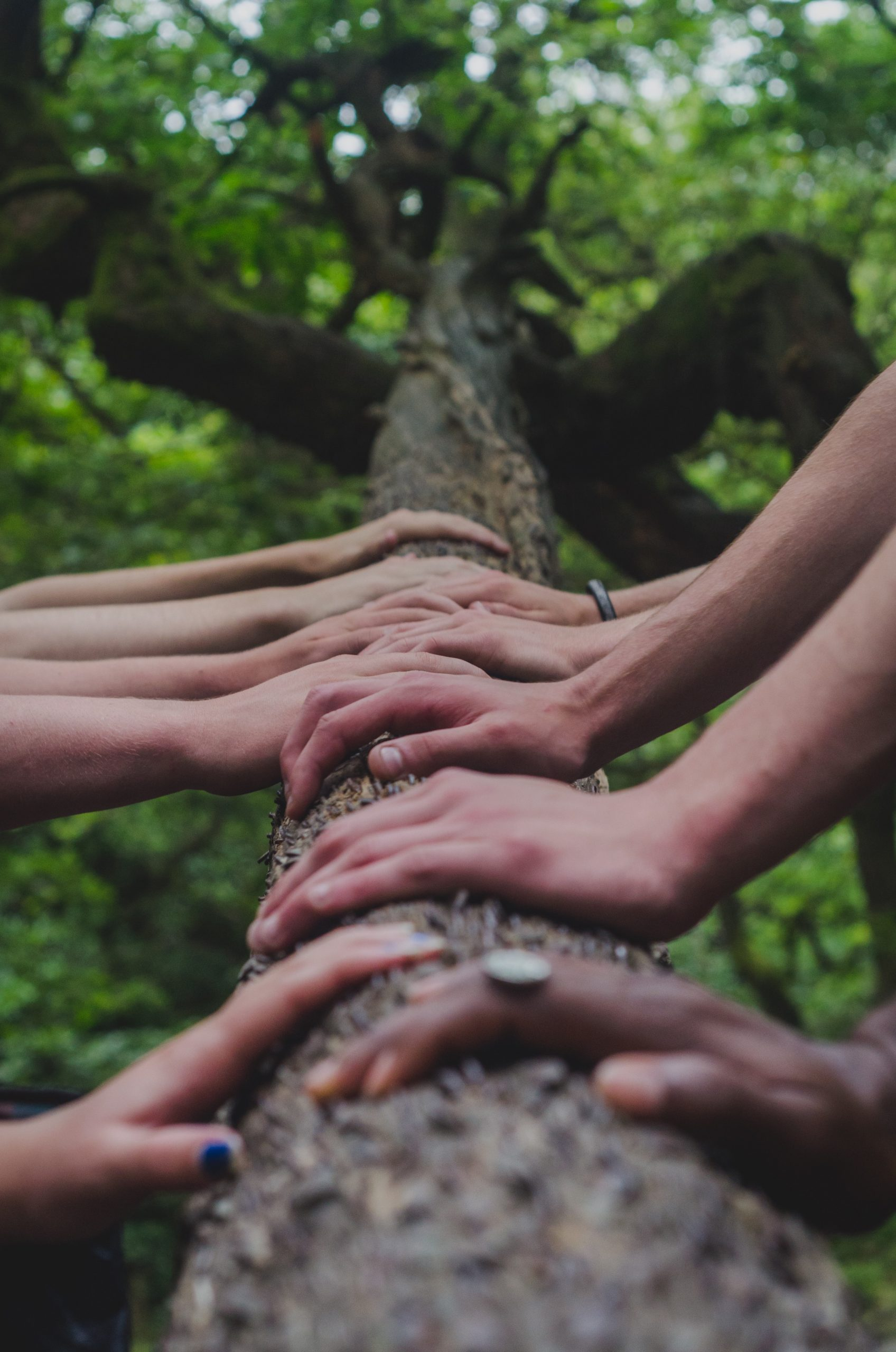 Image shows lots of hands in a line on a log.