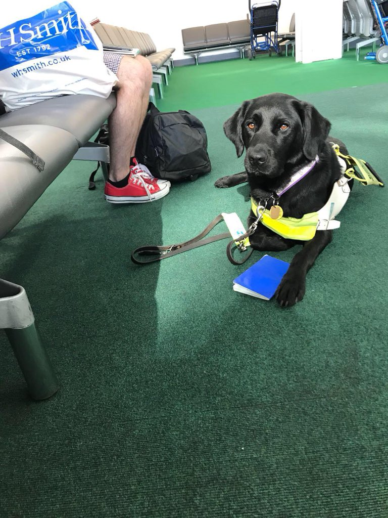 Jazzy - Elin's black lab guide dog - sat on a green carpet at an airport departure lounge.
